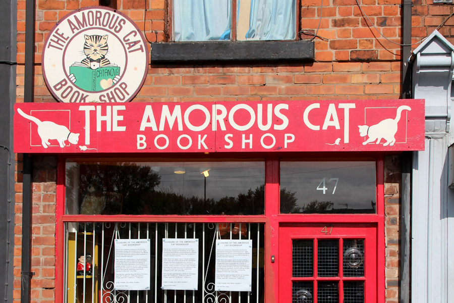 Amorous Cat